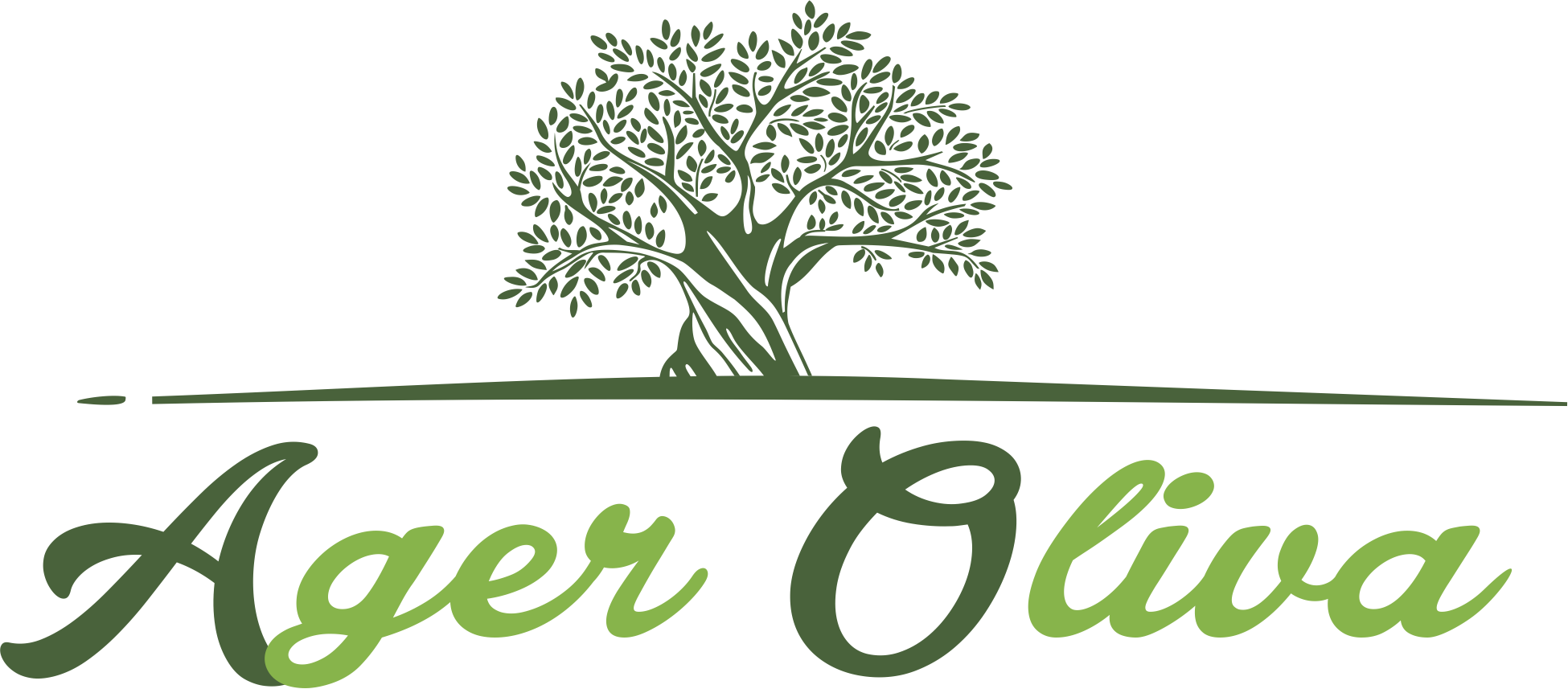 Adopt an olive tree in Tuscany